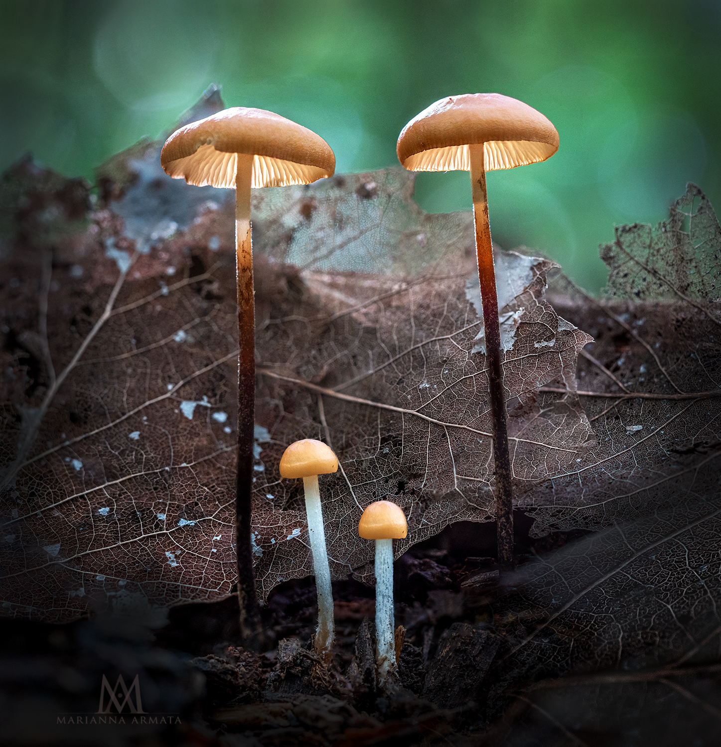 two big + two small shrooms-LR