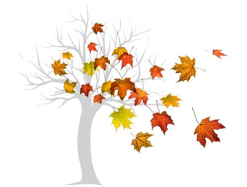 windblown maple tree
