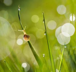 morning-snail-droplets-P5230097.jpg