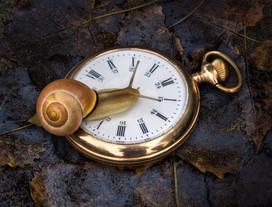 slow-time-onleaves-P1870496.jpg