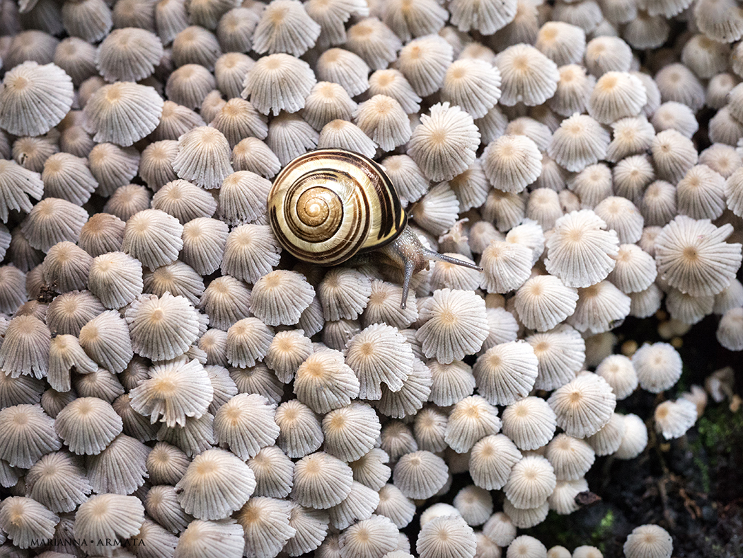crumble cap carpet for a snail