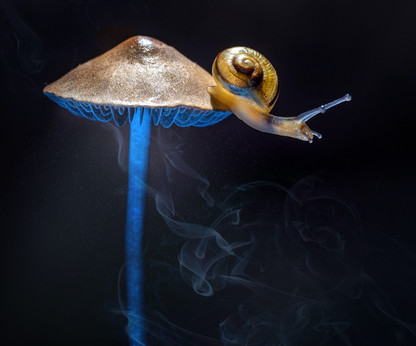 snails come out at night