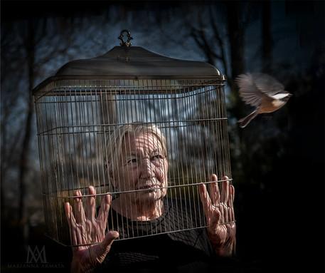 Bird-cage-LR.jpg