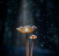 an enchanting night