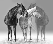 3 horses, 3 tones.jpg
