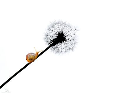 snail-minimalism-P5260062-sign.jpg