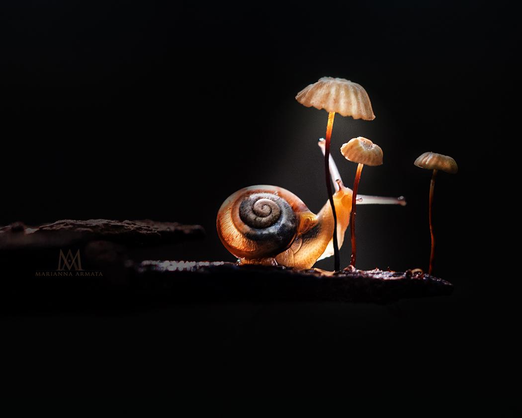 snail's lamp