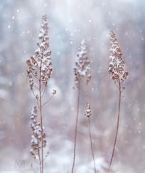 Dec-snow