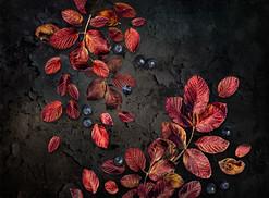 wild-rose-leaves-P1855589-LR.jpg