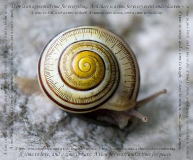 snail-time-P2590216-1050.jpg