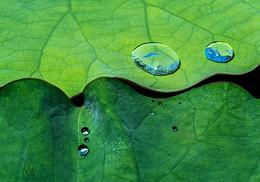 lotus-P1597798-LR.jpg