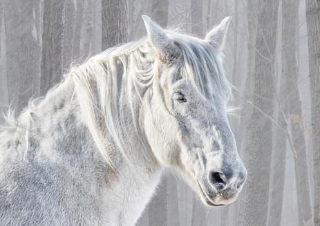 you can take a white horse anywhere.jpg