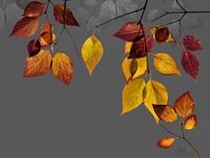 leaf collage