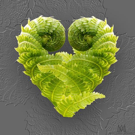 fern-heart-3-P1493852-LR.jpg