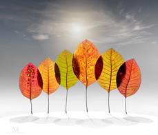 leaf-trees