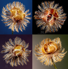tiny-dry-flowersx4-sign.jpg