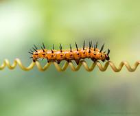caterpillar-P2060690-LR.jpg