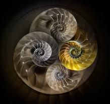 nautilus clockwork