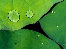 lotus-P1597803-LR.jpg