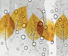 hydragea leaves