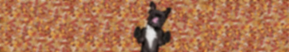 HowlsKitchen_Dog_Product_Extended.jpg