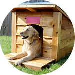 Dog House Example.png