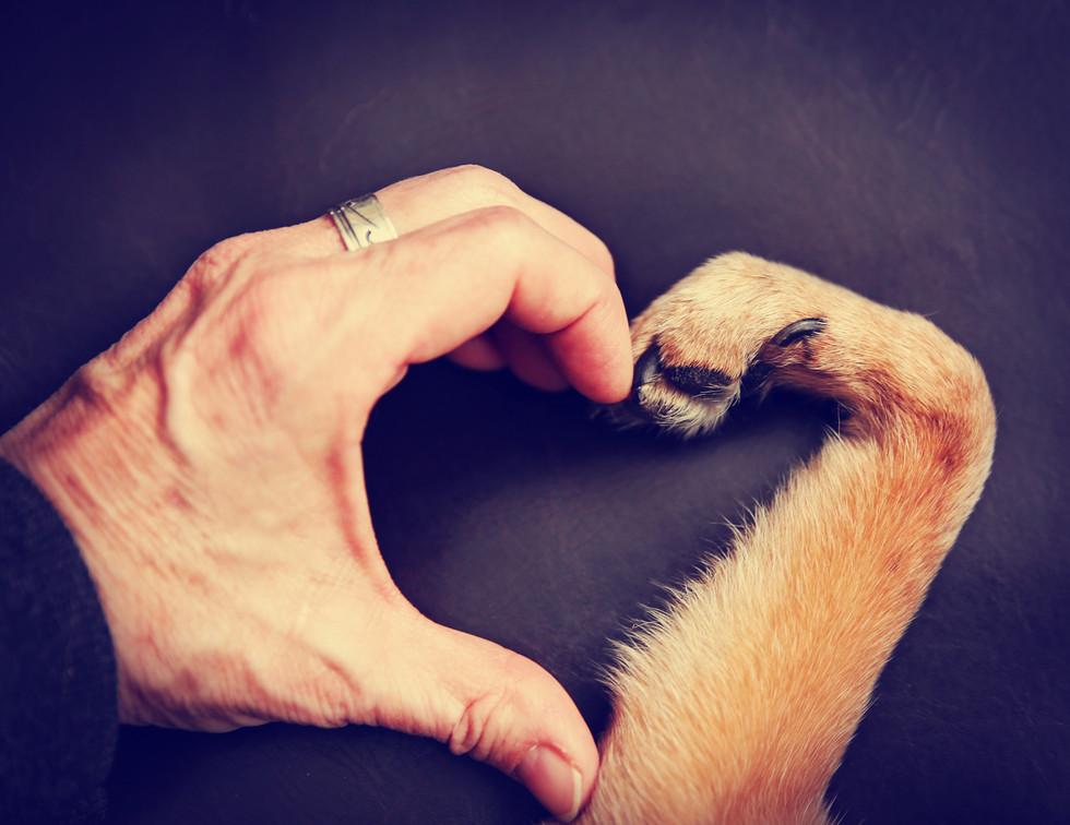 Heart shape paw-huge.jpg