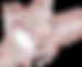 robin logo white.png