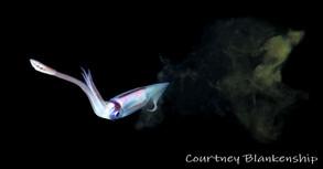 Squid w. Ink.BW01