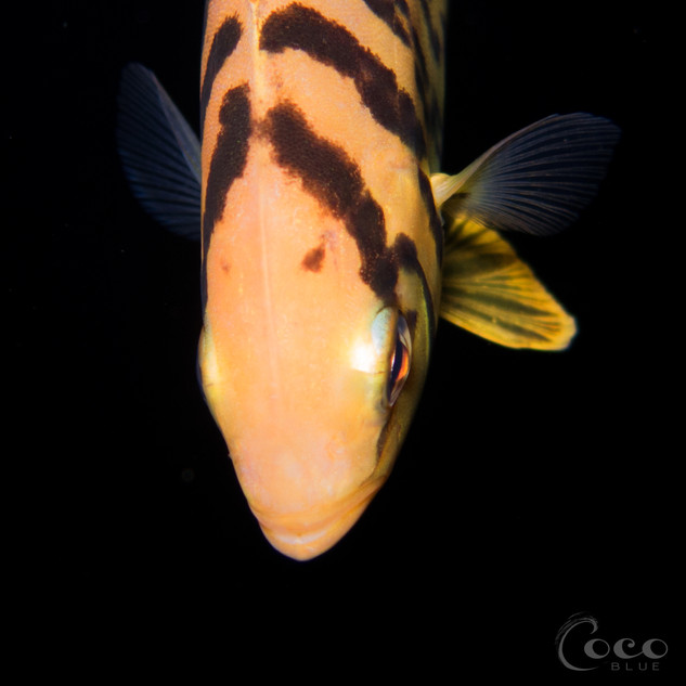 Unknown Juvenile Fish Face.BW13
