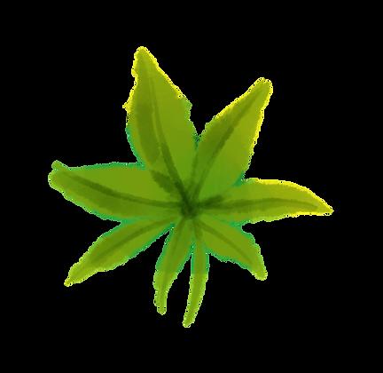 Dreamy Cannabis Leaves
