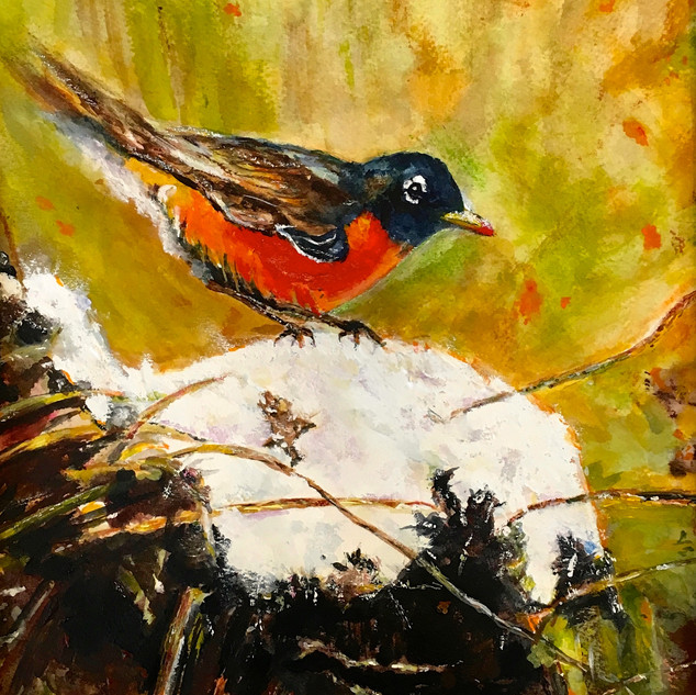 """Early Spring Robin"""