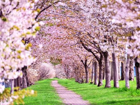 「正しい季節の過ごし方~春編」の開催のお知らせ