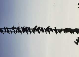 Vogelschwingen in Indien