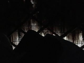 Morgengrauen am Bettrand