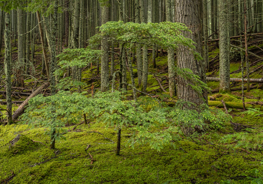 This image was captured on Avalanche Trail after a summer rainstorm.