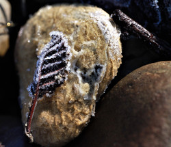 Frosty Leaf & Rock
