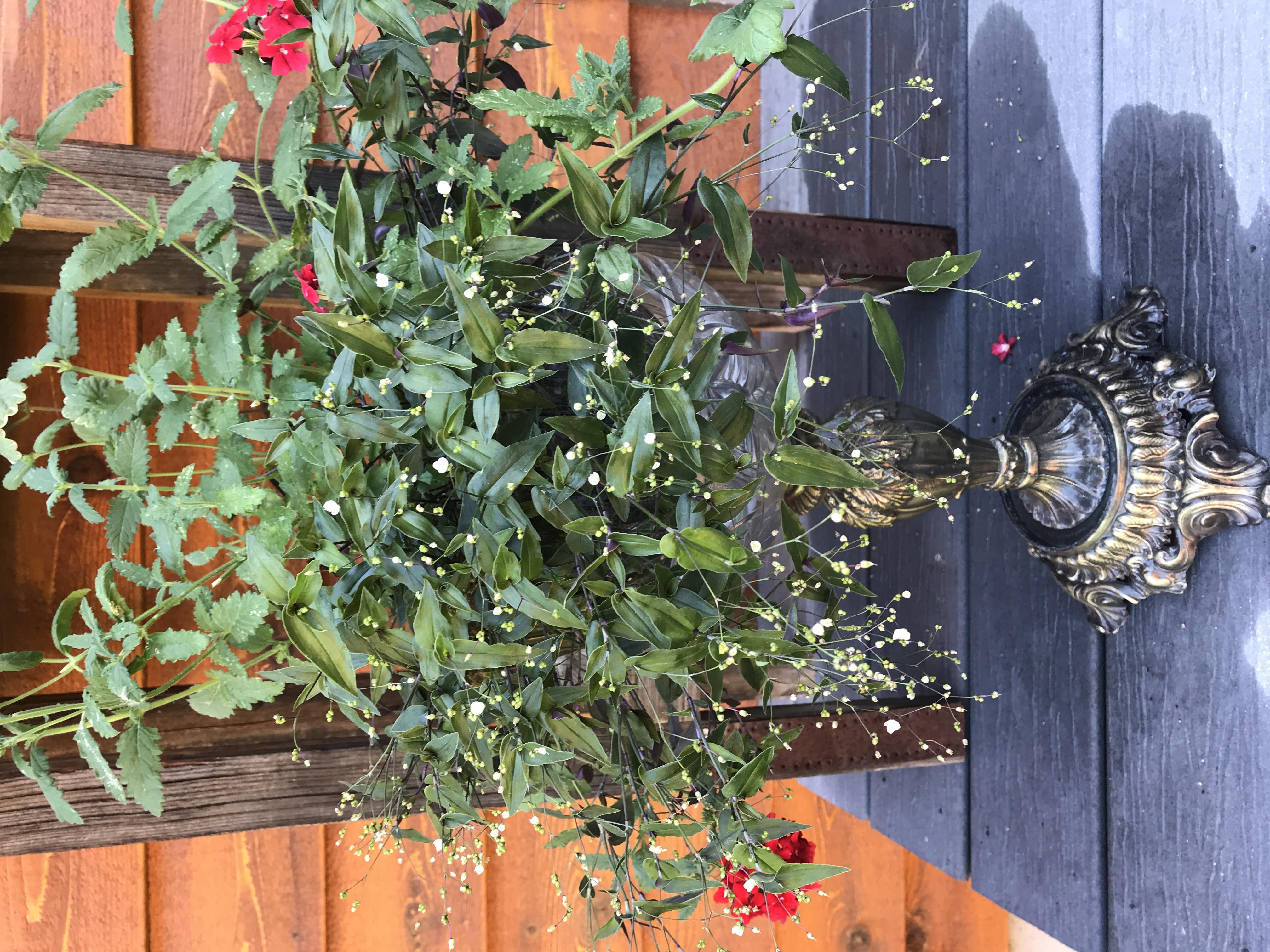 glass bowl planter