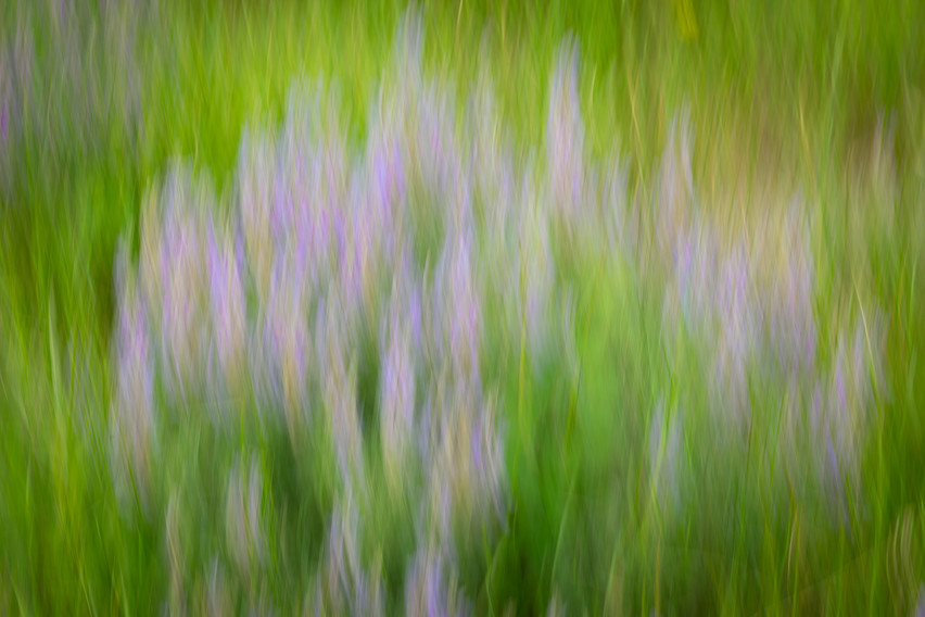 This artistic image was created using intentional camera movement.