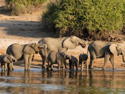 Botswana's Safari Game