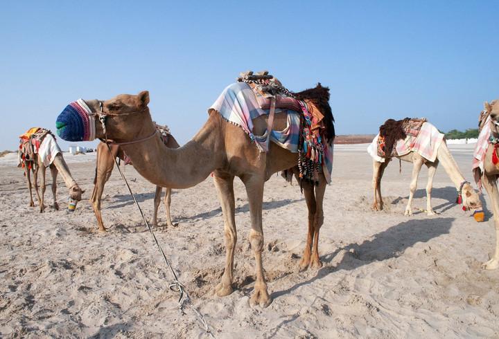 Qatari Desert