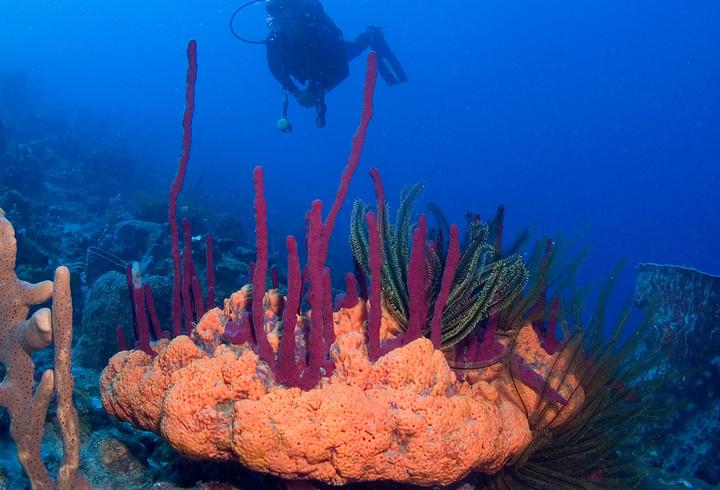 Secret Bay Scuba Diving