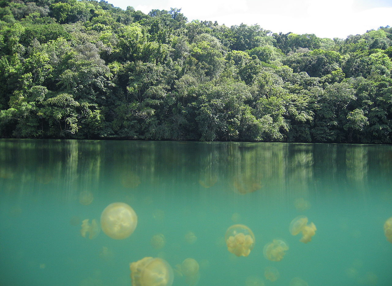 Palau's Jellyfish Lake