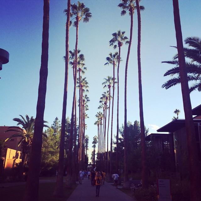 #arizonastateuniversity #alum #palmwalk 🌴🌴