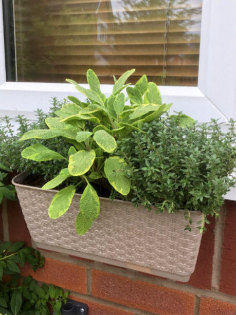 Herb WINDOW BOX with a DIFFERENCE SMALL Brackets & Box FREE UK P&P