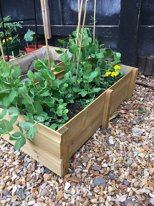 Vegetable Herb Salad Flower Grow Box