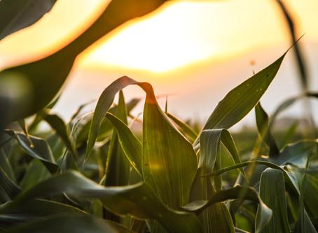 農業發展新思維-循環農業(二)
