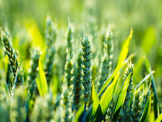 新農業,從復原大自然循環開始!