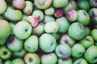 Reinette apples _ Roman Rose_ Rhode isla