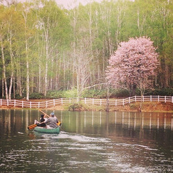 Cherry blossom at Minamioka lake